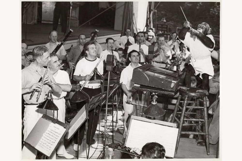 Jo-jo the chimpanzee rehearses the Robin Hood Dell Orchestra in July of 1940.