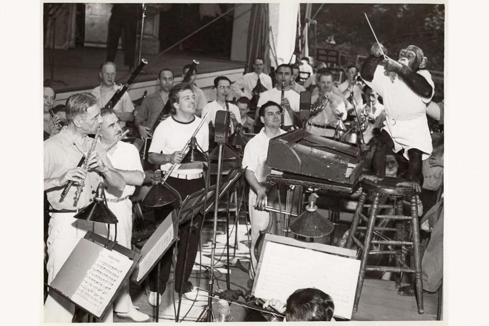 Jo-jo the chimpanzee rehearses the Robin Hood Dell Orchestra in July of 1940.